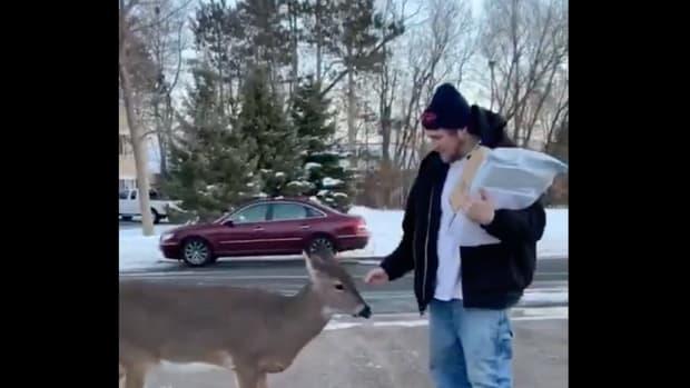 viral deer Hugo