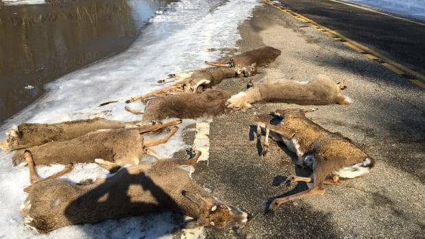 deer carcasses