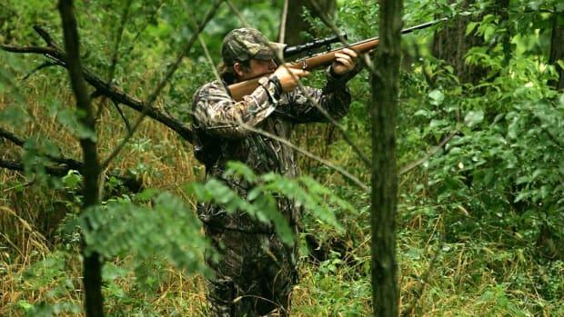 Hunting squirrel