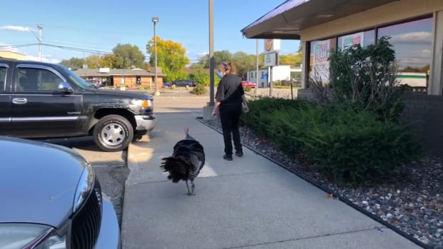 Turkey escorted away from Burger King