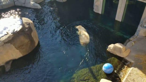 Como Zoo's Nan playing in the water