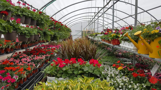 minnesota-gardens-chaska-greenhouse