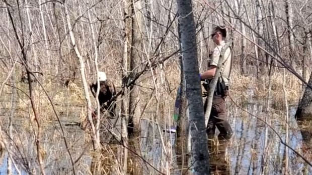 Eagle rescue in Chisago County.