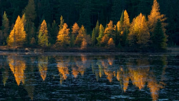 Tamarak reflections - potlatch