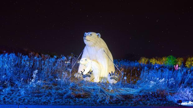 nature illuminated - minnesota zoo