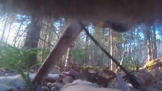 wolf collar video