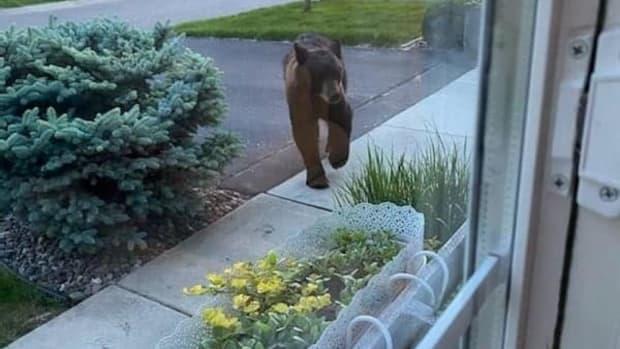 chaska bear 2
