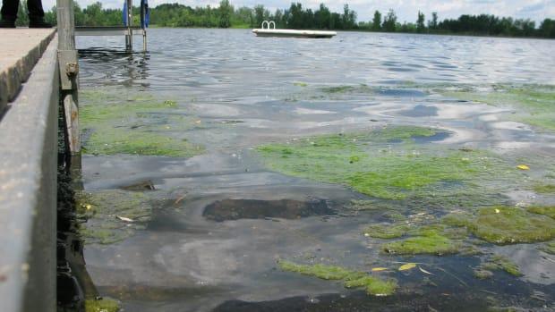blue-green algae mpca