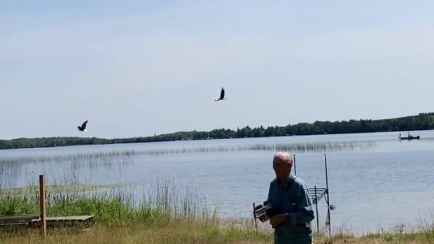 Video of people releasing eagles #2
