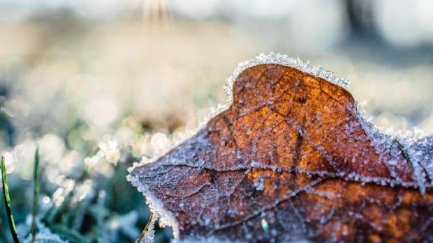 Pexels - leaf frost ground