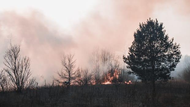 Pexels - wildfire smoke