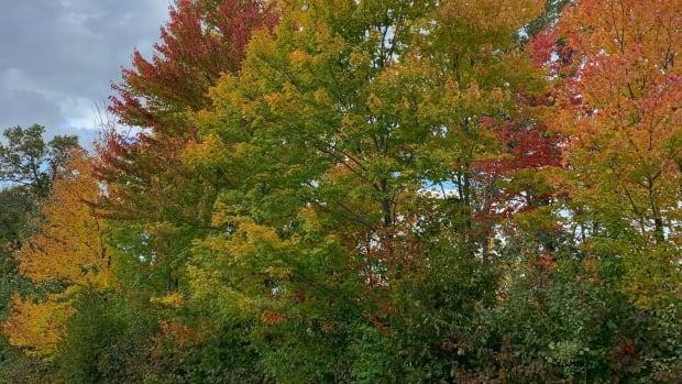 20191006_fall colors
