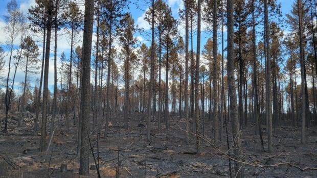 MNICS - greenwood fire - Sept 2