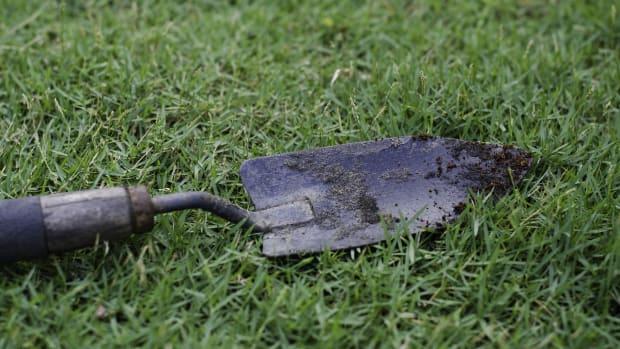 Pixabay trowel lawn grass