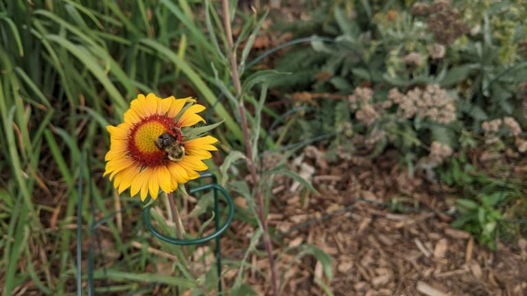 From lawn to Minnesota native prairie, part 2: Sun, shade and soil