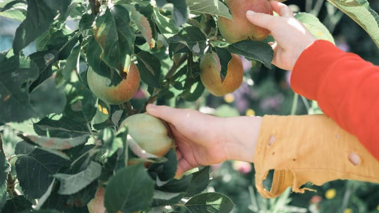10 apple orchards to visit near the Twin Cities