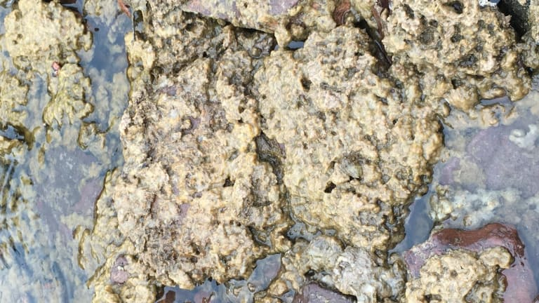 Invasive algae called 'rock-snot' discovered in several Northeastern Minnesota streams