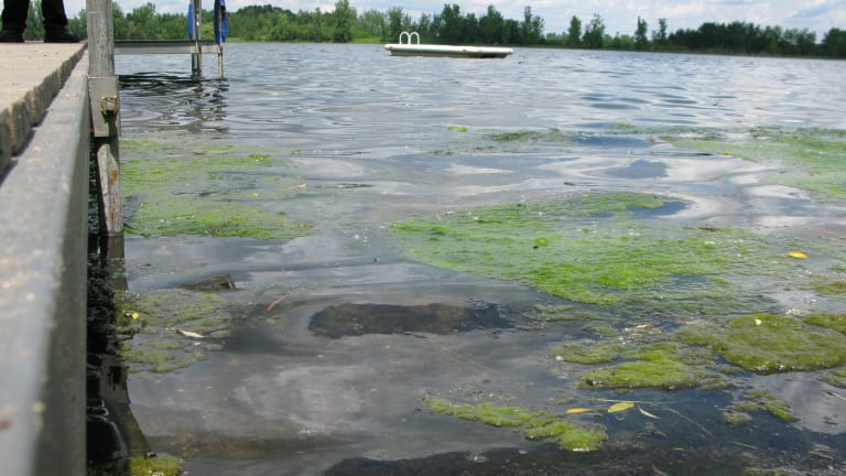Warm fall weather leads to potentially harmful algae blooms on Minneapolis lakes