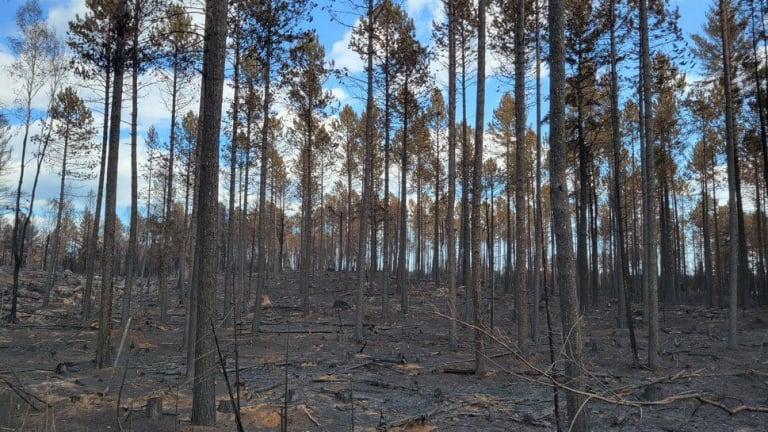 The latest on the Greenwood, John Ek and Whelp fires in northern Minnesota