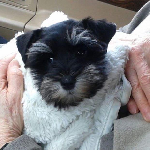 Zoey, a puppy stolen during a Minnetonka burglary.