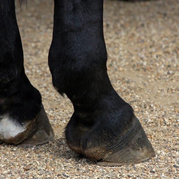 Horse hooves, horses