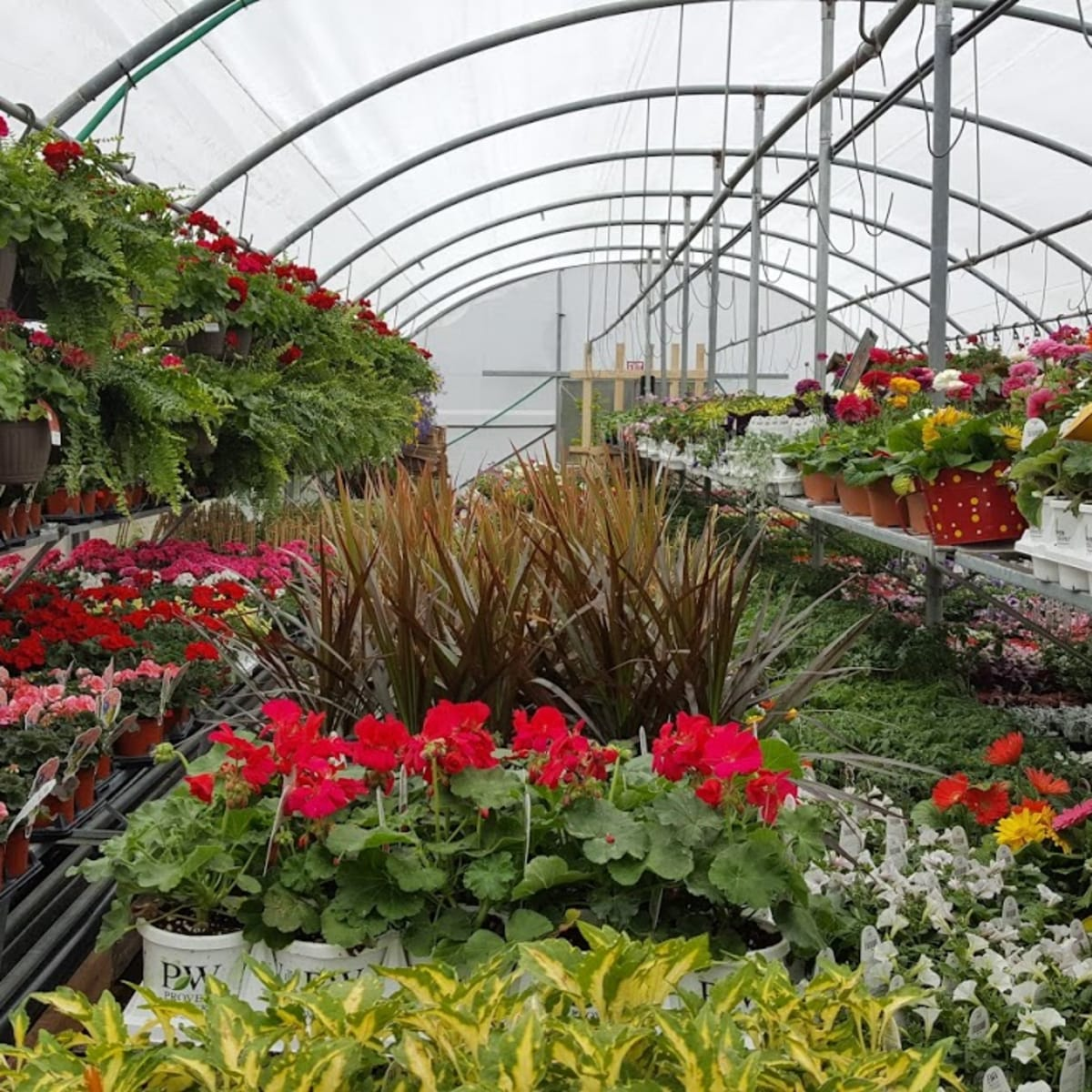 Minnesota Garden Centers Push For Stay At Home Exemption Bring