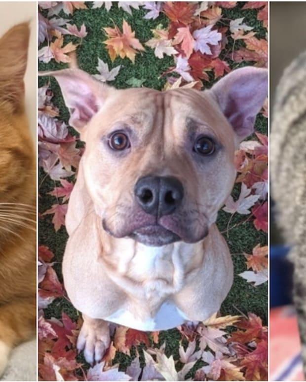 adoption pets (1)