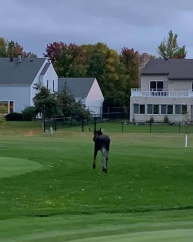 moose fargo