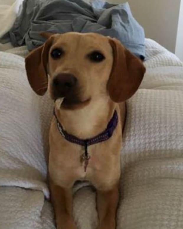 lola missing dog