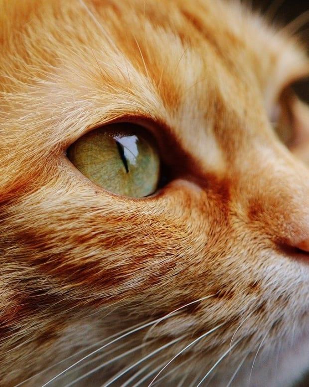 cat-1455468_1280