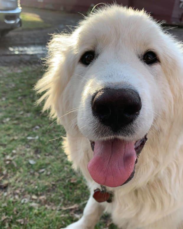 carver county dog