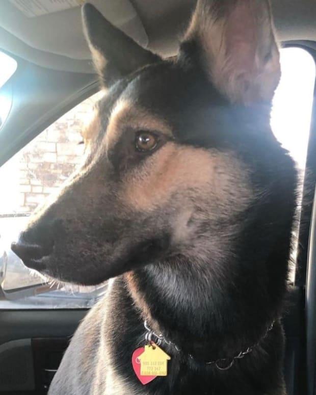 Facebook - GoGo dog stolen vehicle -  St. Paul Police Department