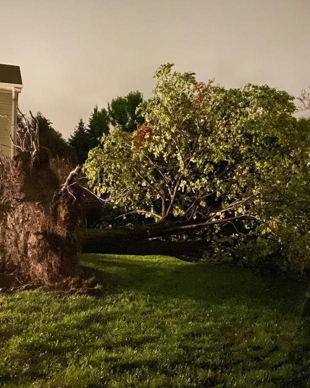 uprooted tree in Burnsville