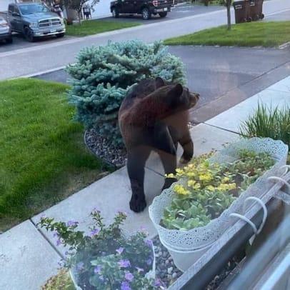 chaska bear 3