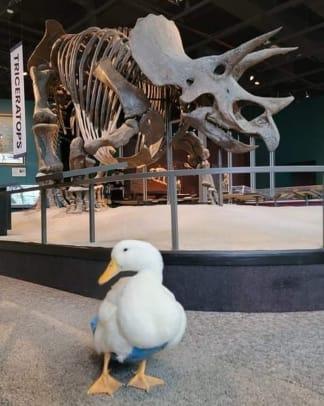 Ben Afquack Science Museum 1