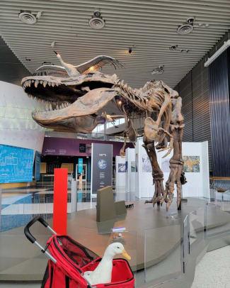 Ben Afquack Science Museum 10