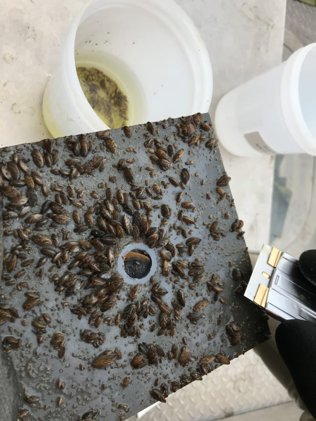 Yearlong research project yields positive results in Minnesota's fight against zebra mussels