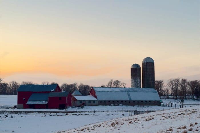 20 Cattle Barns Have Collapsed In Minnesota Under Weight