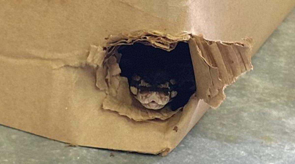 Python in Anoka