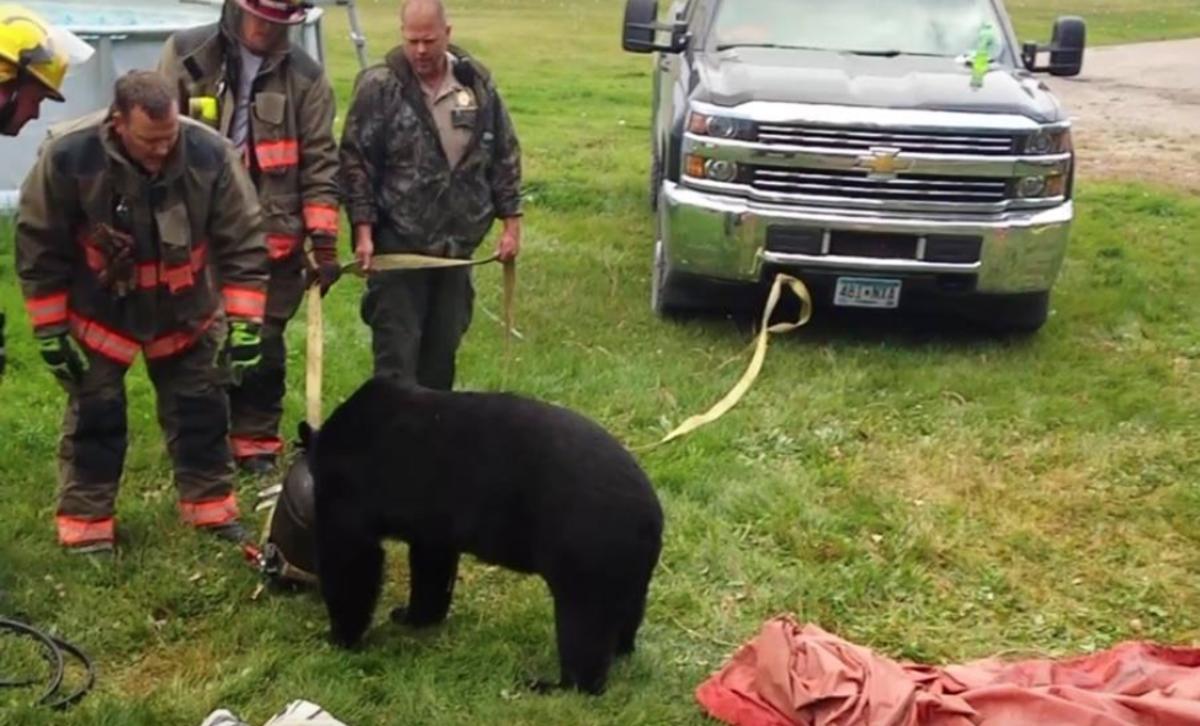 bear stuck