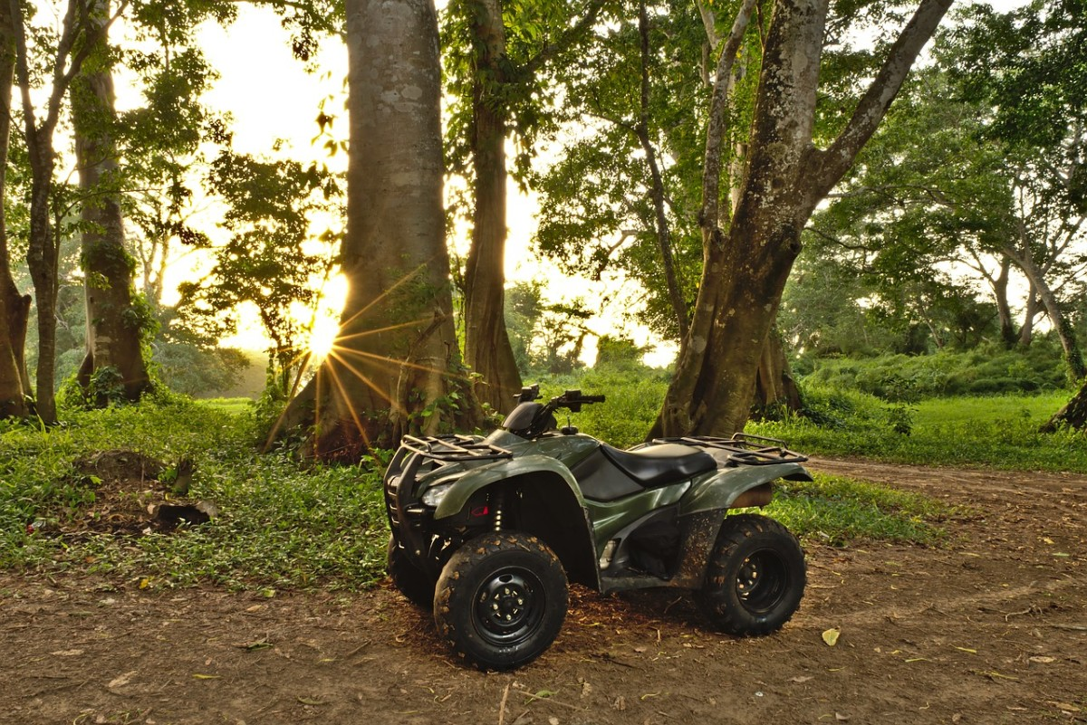 pixabay-atv-forest