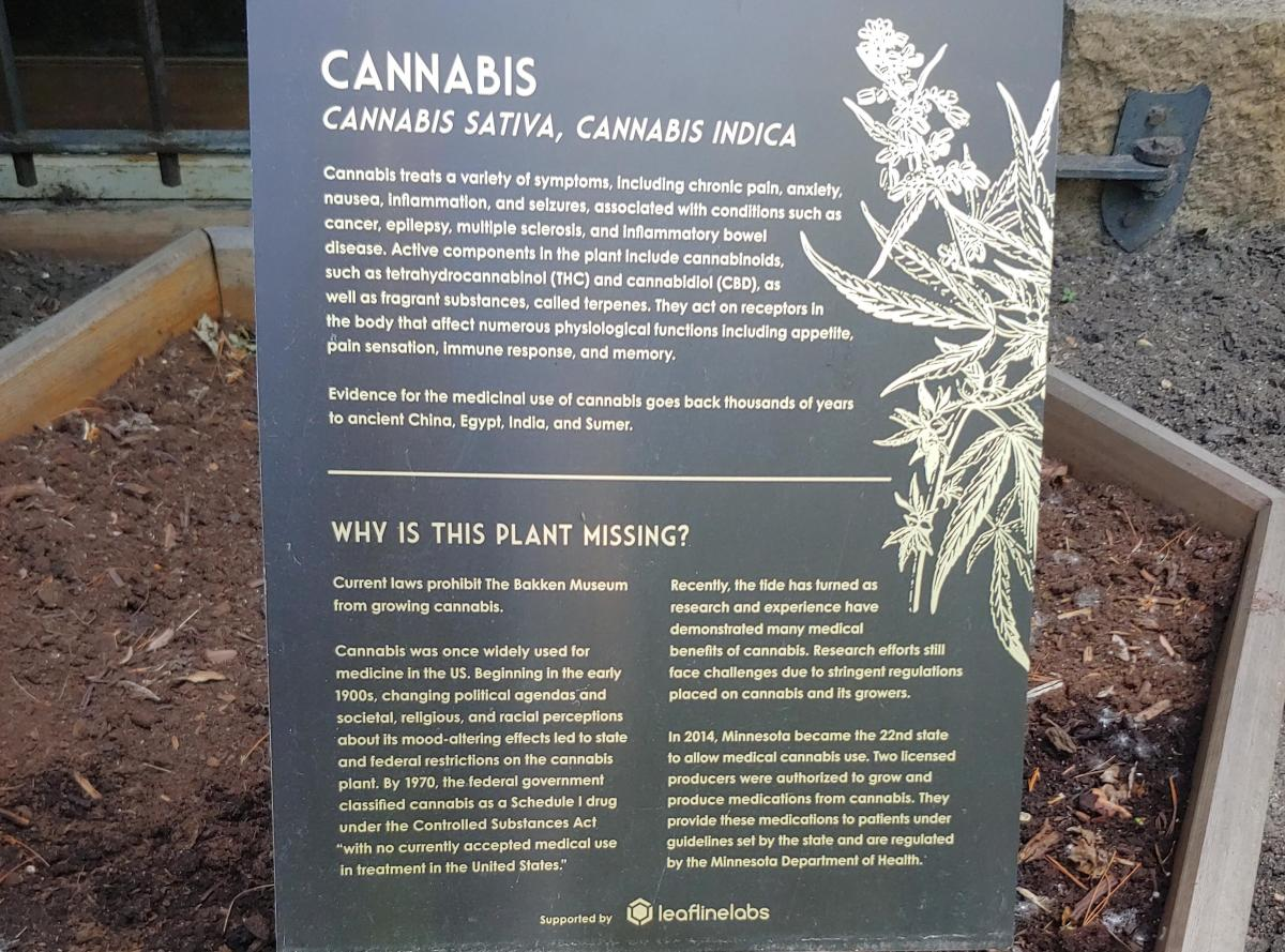 A marijuana display at the Bakken Museum.