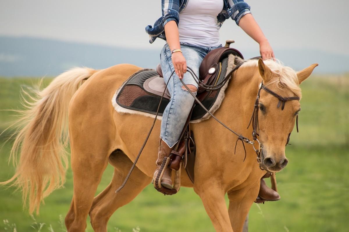 horse-3450740_1280