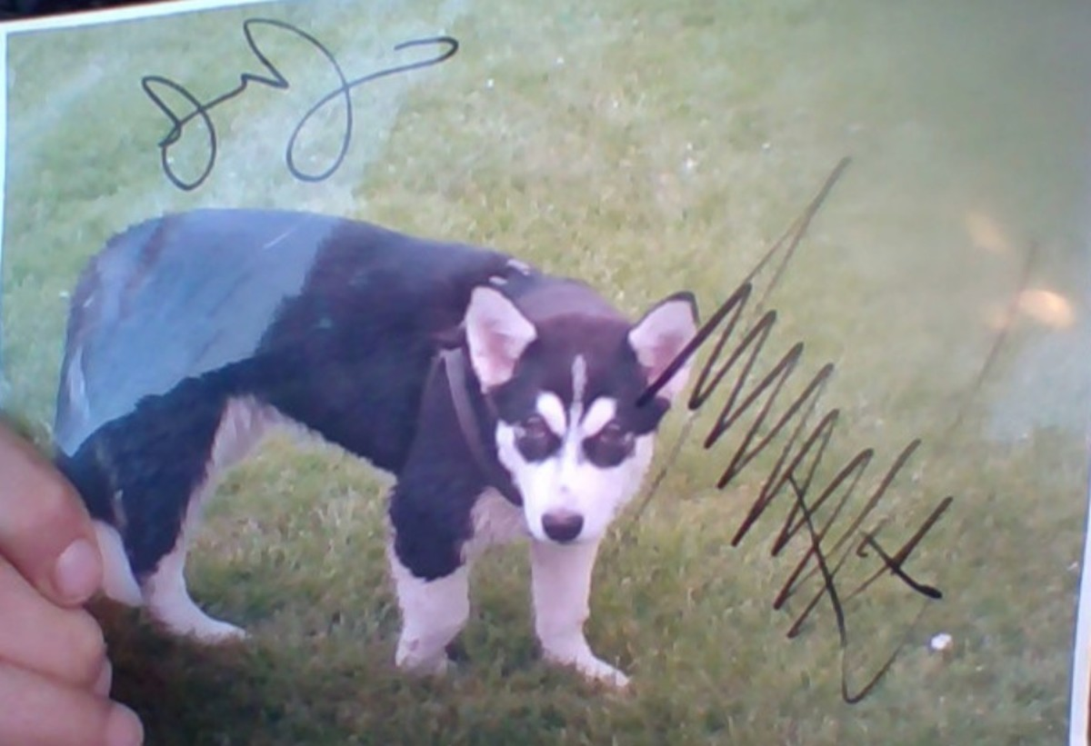 """A picture of Randal Thom's dog """"Donald Trump,"""" signed by President Trump."""