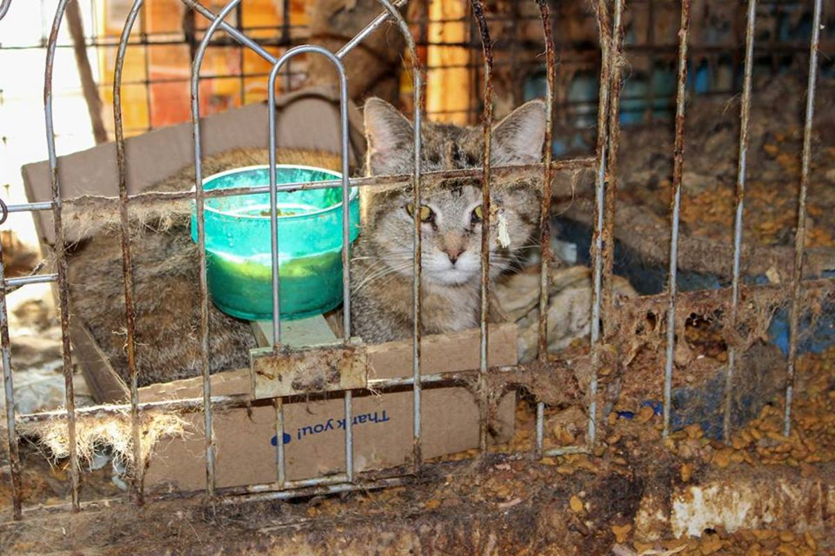 cat-rescue-rural-minnesota-march-2019-animal-humane-society