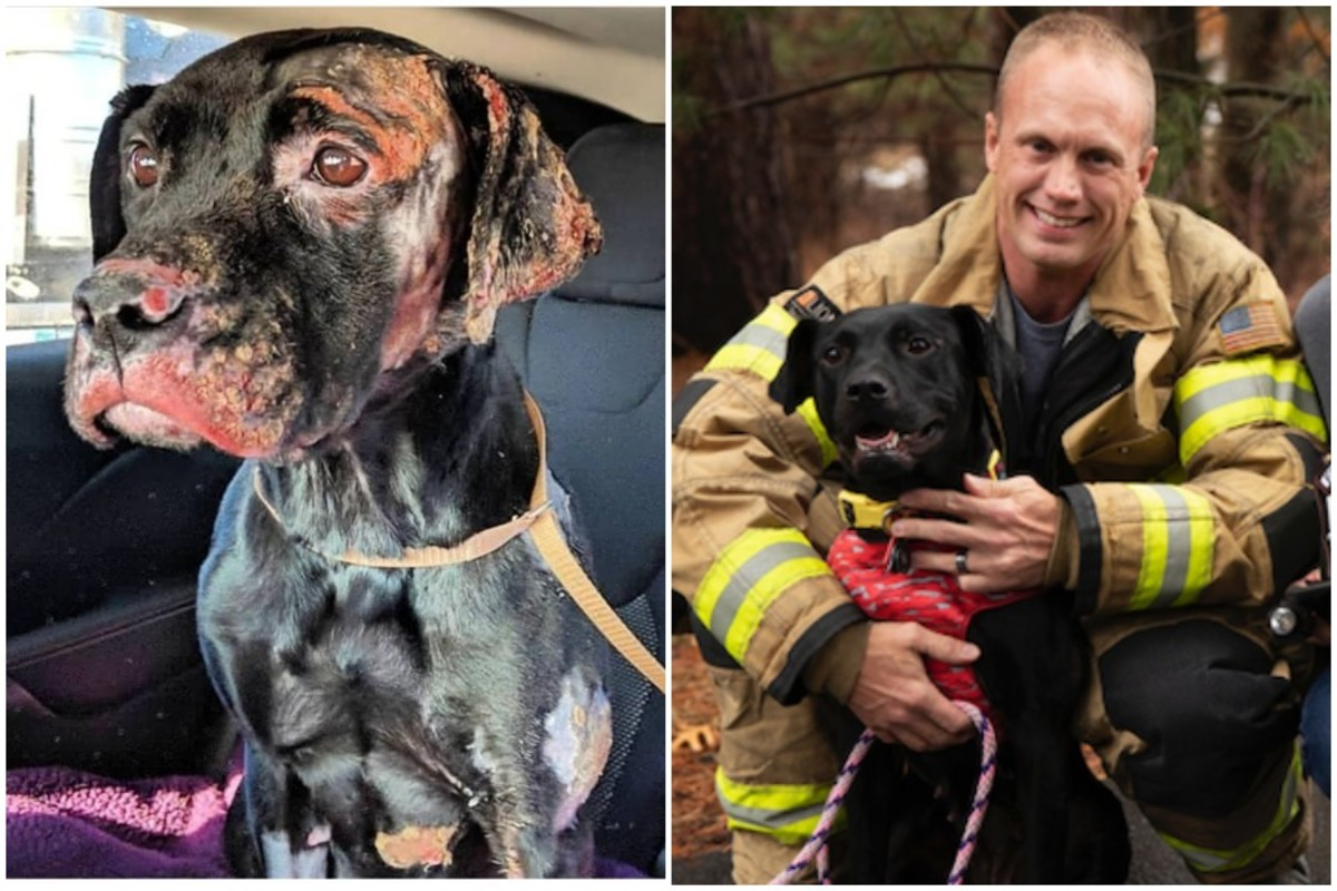Rescued dog and her new owner, an Indiana firefighter