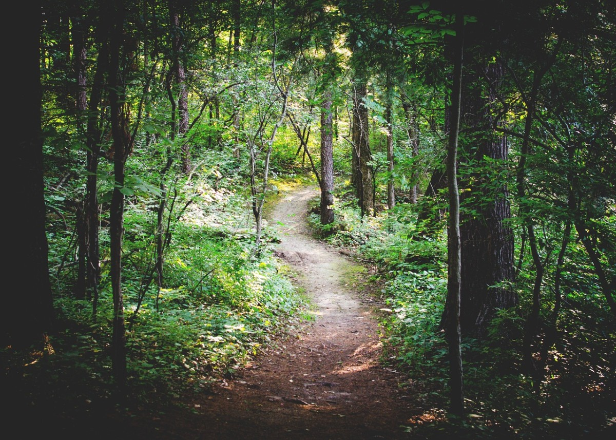 forest-path-1081805_1280