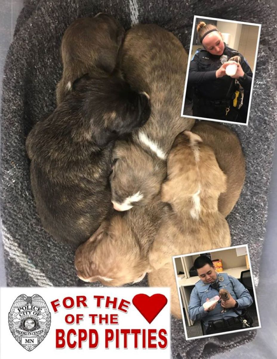 brooklyn center police puppies facebook april 2019 RESIZE