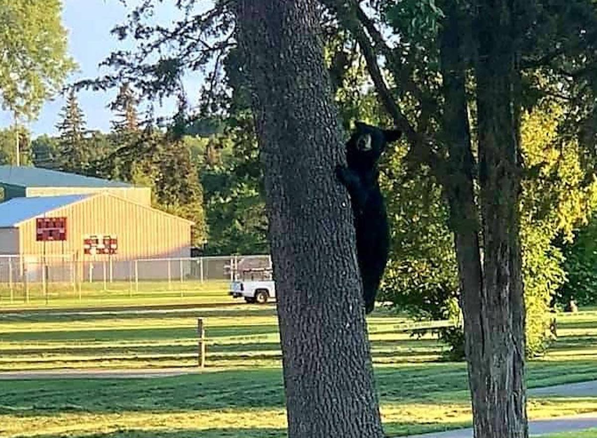 You can track your bear sightings on the DNR website.
