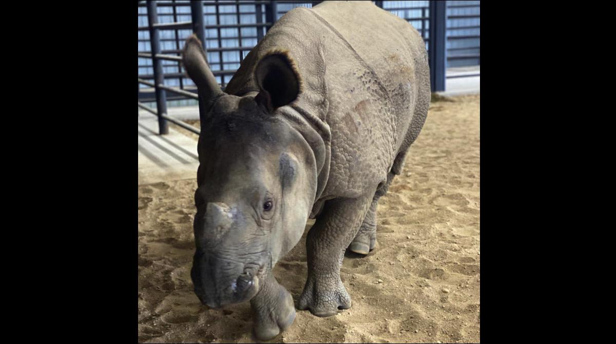 hemker park and zoo rhino - edit